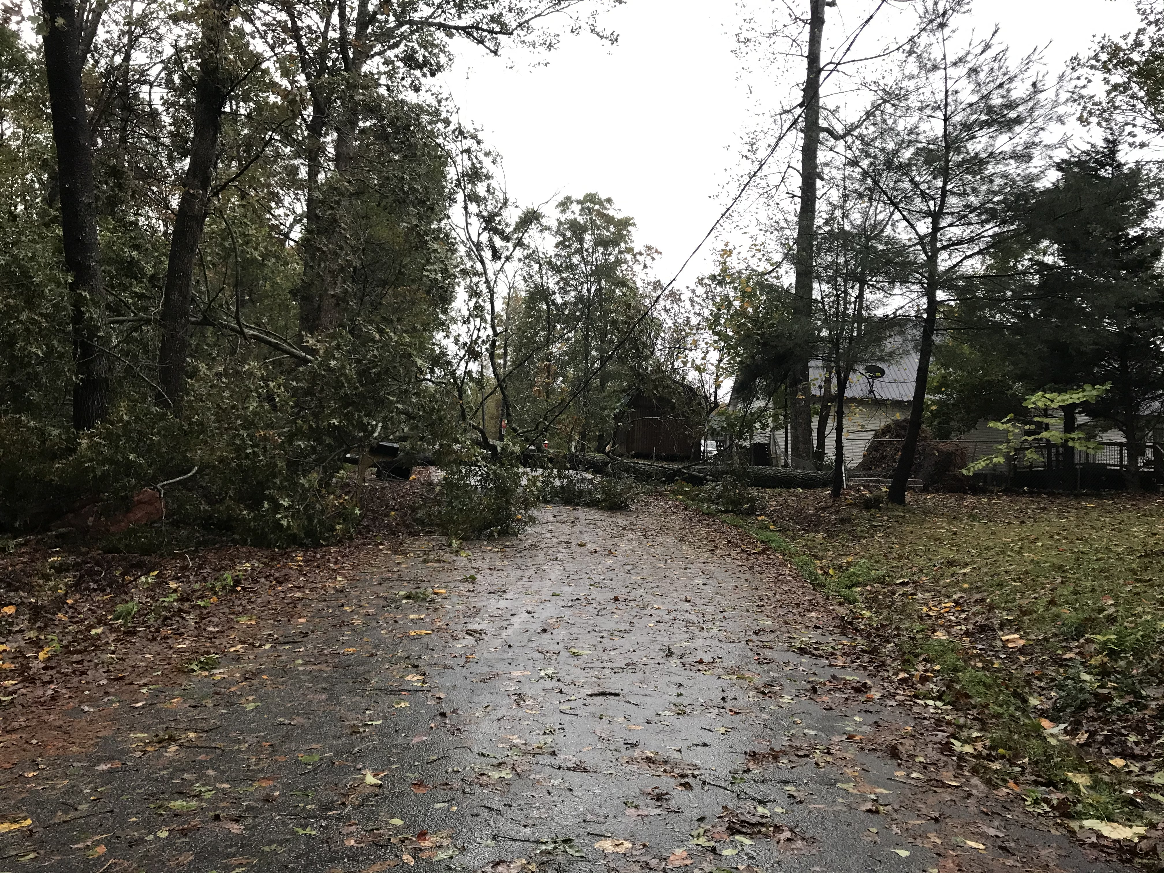 A tree was down on a line on Jackson Circle Thursday morning. (Photo/Stephanie Hill)