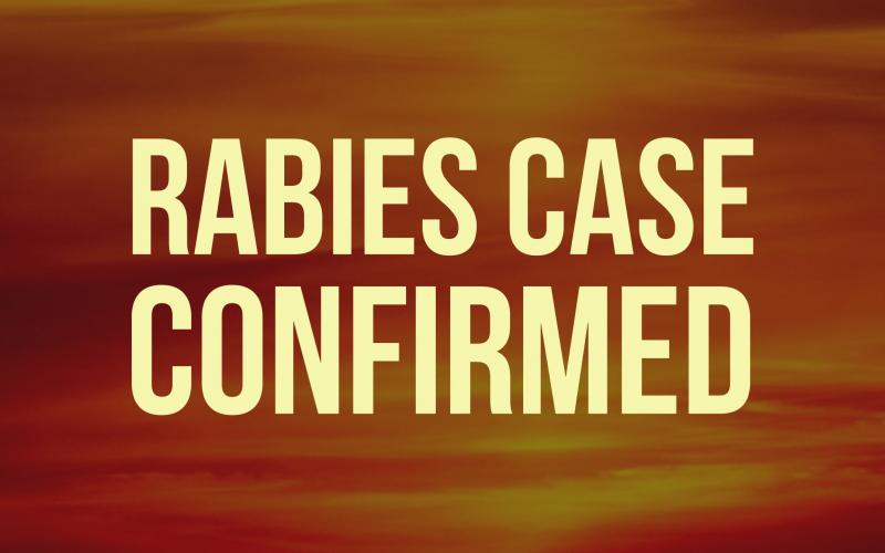A rabid raccoon in the area of Satterfield Road is the ninth confirmed rabies case in White County for 2020.